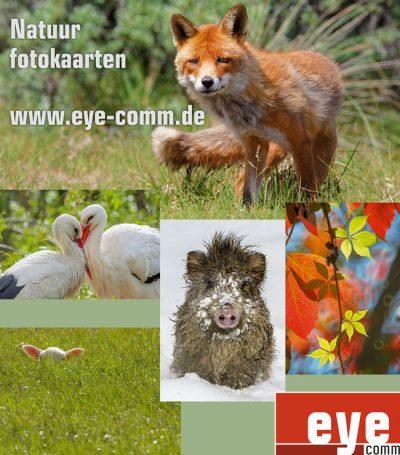 eye-comm natuur fotokaarten